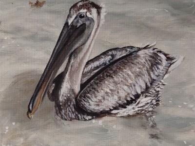 Le Pelican